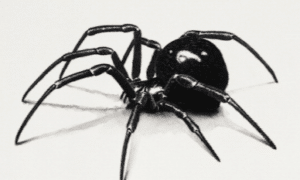 black-widow-spider-bite-2