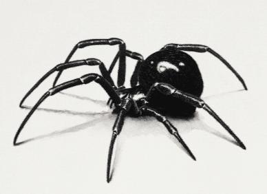 black-widow-spider-bite-2