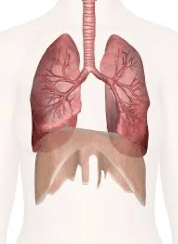 Lung Diseases: Edema Causes and Treatment
